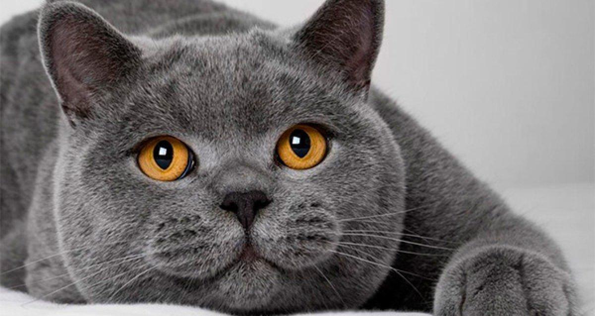 -50% на билет на выставку кошек 19-20 марта