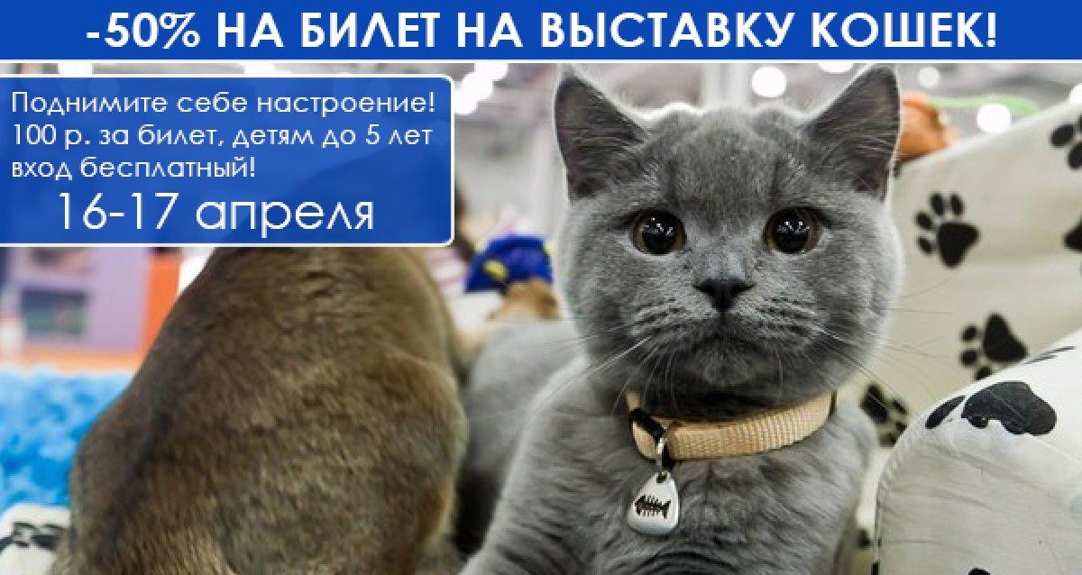 -50% на выставку кошек 16-17 апреля. Поднимите себе настроение! 100 р. за билет, детям до 5 лет вход бесплатный