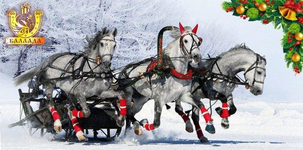 -74% на конные прогулки, новогоднюю программу