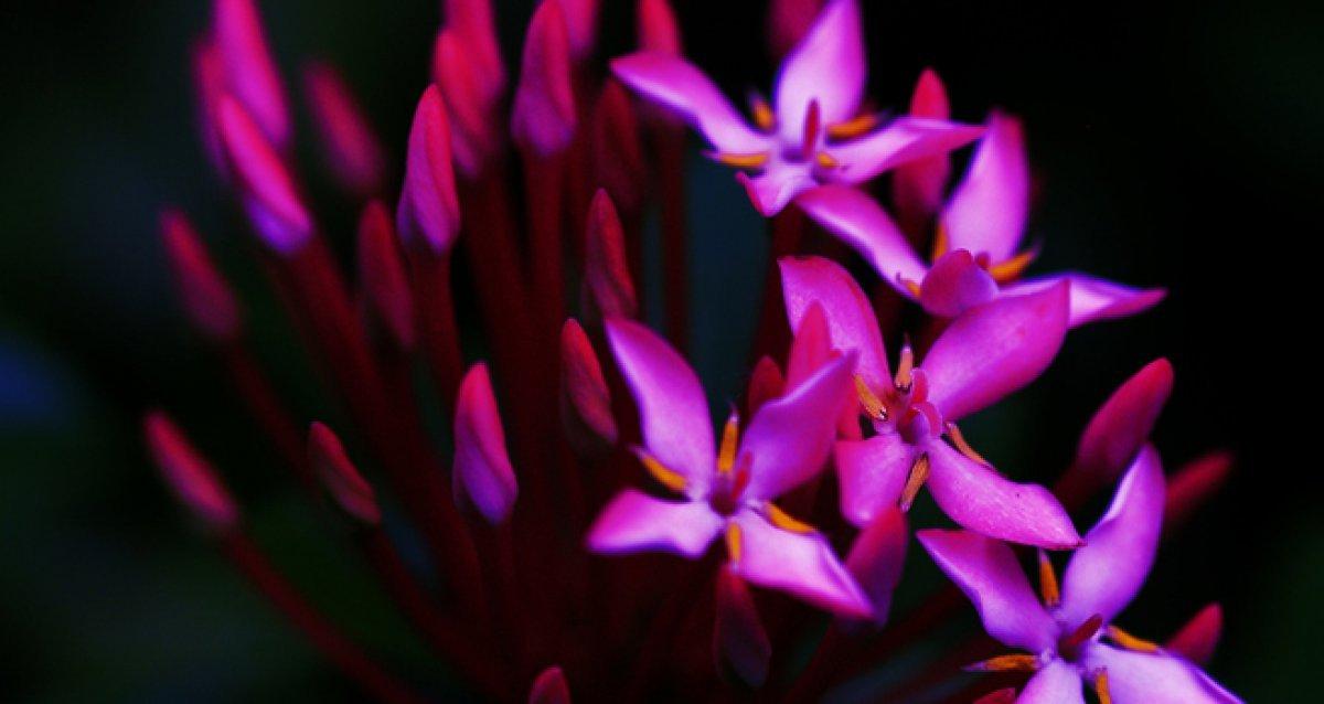 Кашпо для ваших любимых цветов