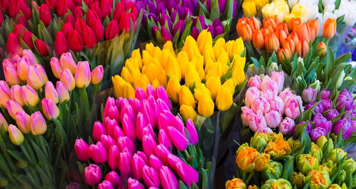 Свежие тюльпаны к 8 Марта! От 35 р. за штуку