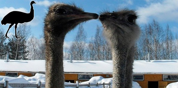 Скидки до 51% на посещение страусиной фермы