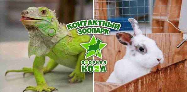 Скидка 50% от контактного зоопарка «Оzорная коzа» в ТЦ «Мегаполис»