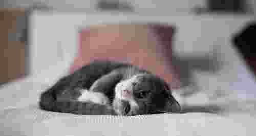 Почему все любят котиков?