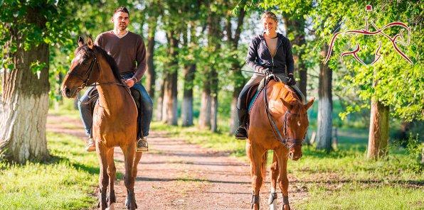 Скидки до 70% на конные прогулки по лесопарку