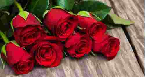 Роза от 25 р.