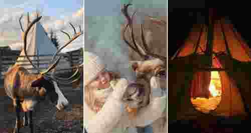 Скидки до 50% на экскурсию на ферму северных оленей «Тайга»