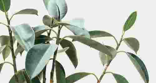 ТОП-15 домашних растений, которые лучше всего очищают воздух
