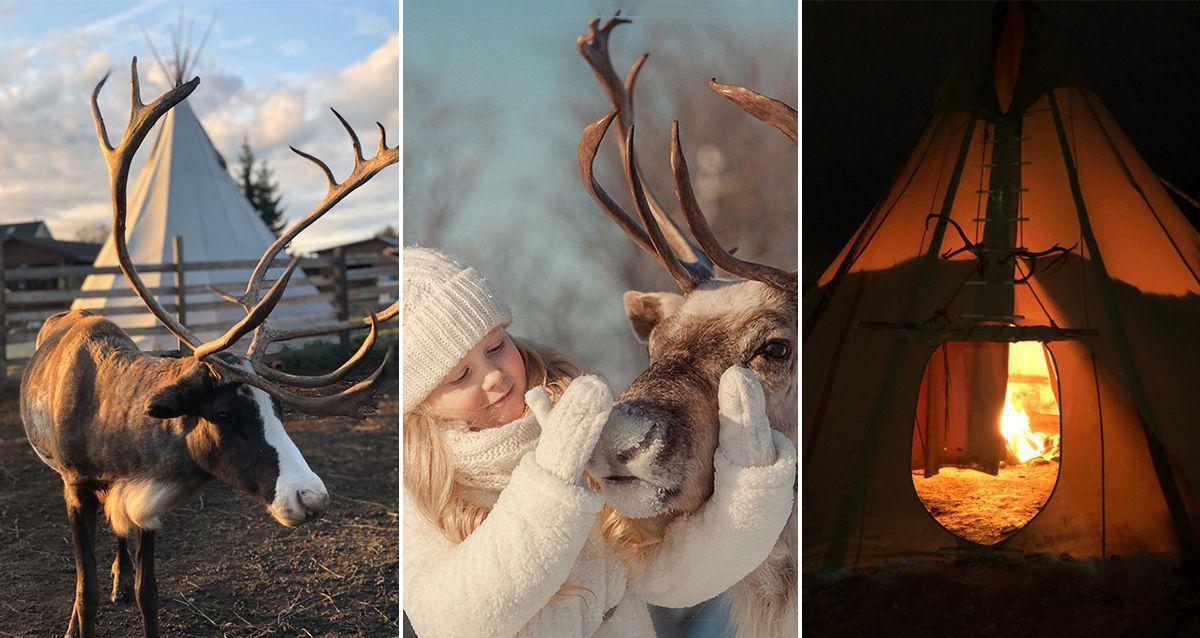 Скидка 30% на экскурсию к северным оленям