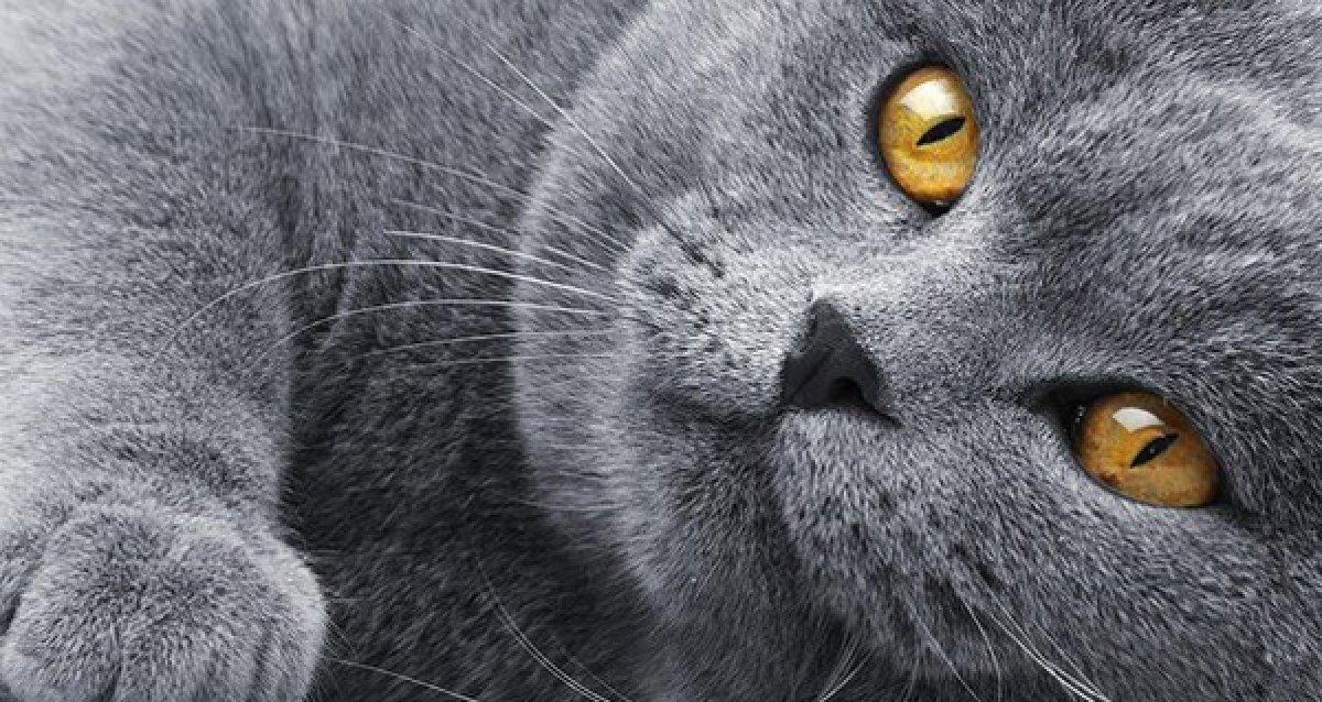 Международная выставка кошек в ТК «Экополис»! 100 р. за билет, детям до 5 лет вход бесплатный