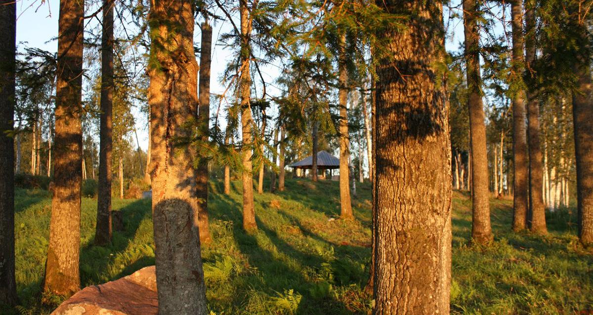 База отдыха «Озерный берег»